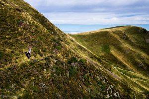 Sente dans la bruyére en fleur annonçant l'automne, les verts sont passés, la montagne sèche en cette fin d'été tire sur les marrons, l'horizon est bleu comme une mer...